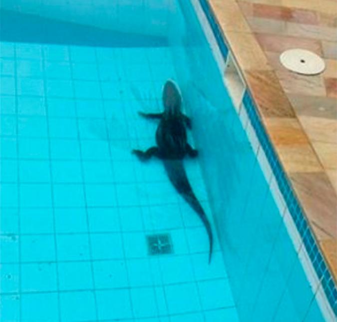 Resultado de imagem para A piscina com jacarés