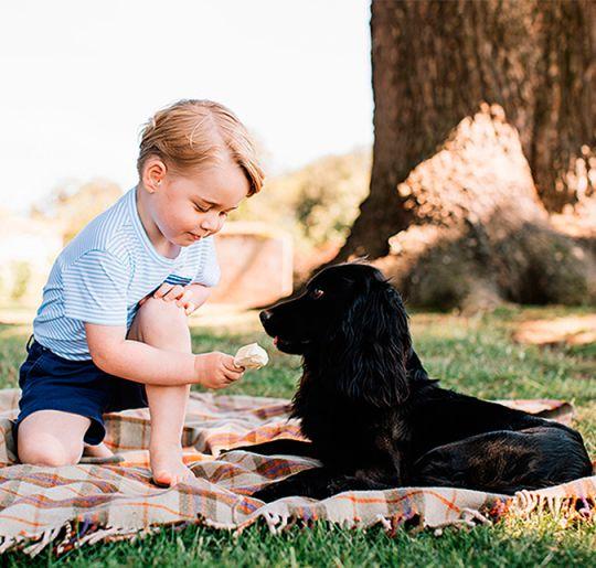 Entenda por que a foto do Príncipe George com o cachorro está gerando polêmica