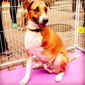 Tatá Werneck adota cachorro sem pata: Doida para chegar e te dar todo o amor que você não recebeu!
