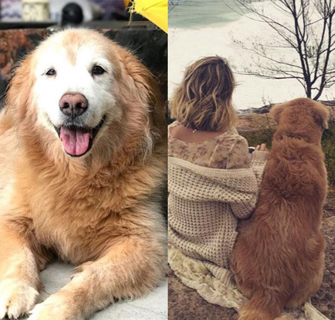 51087f8d7cf59 Giovanna Ewbank lamenta morte de seu cachorro  Não consigo acreditar ...