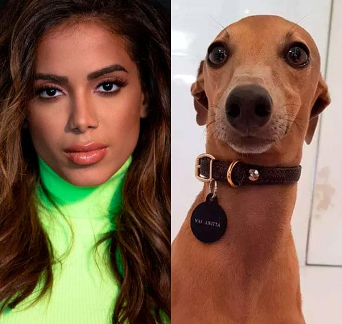 779c160f57752 Após cachorro de Anitta sofrer ameaças